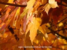 orange-gold glory, 11/9/13